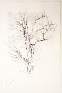 13-ash-tree-2-beside-old-stone-shed-w12-x-h17-pencil-on-paper